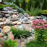 красивые высокорослые хвойные растения в ландшафтном дизайне дачного участка фото