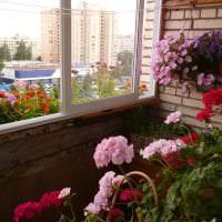 яркие цветы на балконе на полках интерьер картинка
