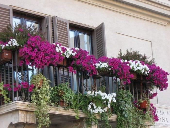 красивые цветы на балконе на полках пример