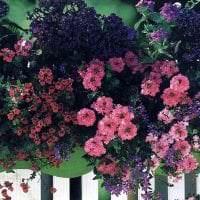 шикарные цветы в интерьере балкона на перемычках интерьер картинка