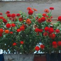 шикарные цветы в интерьере балкона на этажерках интерьер картинка