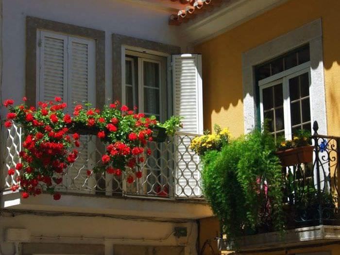 яркие цветы в интерьере балкона на перемычках дизайн