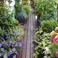 красивые цветы в интерьере балкона на перемычках пример картинка