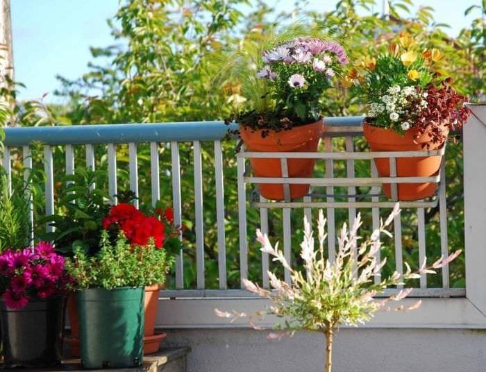 красивые цветы в интерьере балкона на перемычках дизайн