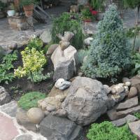 красивые стелющиеся хвойные растения в ландшафтном дизайне дачного участка картинка