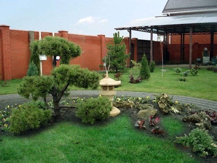 красивые среднерослые хвойные деревья в ландшафтном дизайне дачного участка
