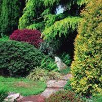 красивые среднерослые хвойные деревья в ландшафтном дизайне дачного участка картинка