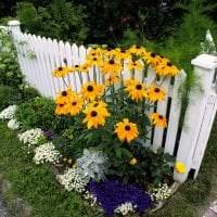 большие низкорослые хвойные цветы в ландшафтном оформлении дачного участка картинка
