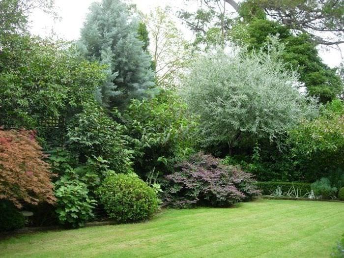 необычный ландшафтный дизайн дачного участка в английском стиле с деревьями