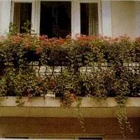 шикарные цветы на балконе на перемычках пример фото