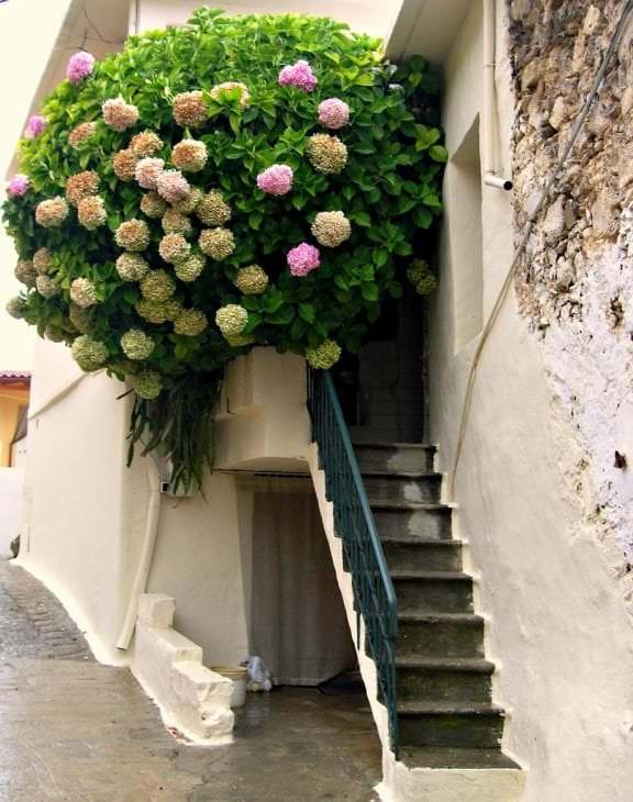 шикарные цветы в интерьере балкона на этажерках пример