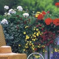 красивые цветы в интерьере балкона на полках пример картинка