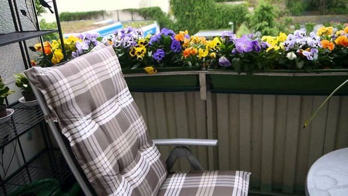 яркие цветы в интерьере балкона на полках дизайн