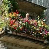 красивые цветы на балконе на перемычках пример фото