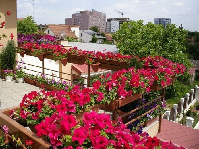 красивые цветы на балконе на полках дизайн