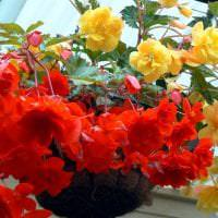 шикарные цветы в интерьере балкона на полках интерьер фото