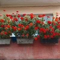 шикарные цветы в интерьере балкона на полках дизайн фото