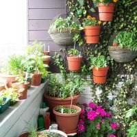шикарные цветы на балконе на полках интерьер картинка
