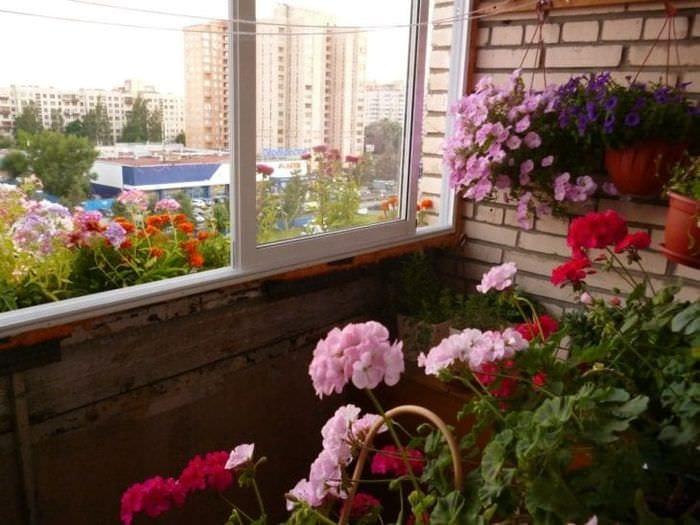 красивые цветы в интерьере балкона на полках пример
