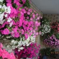 шикарные цветы на балконе на этажерках дизайн фото