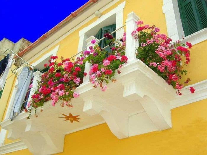 шикарные цветы в интерьере балкона на перемычках пример