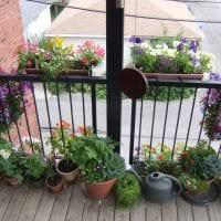 яркие цветы в интерьере балкона на этажерках дизайн фото