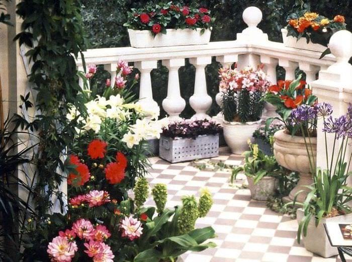 красивые цветы в интерьере балкона на полках дизайн