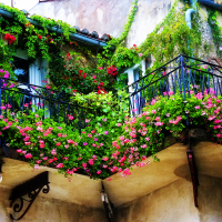 красивые цветы на балконе на этажерках интерьер картинка