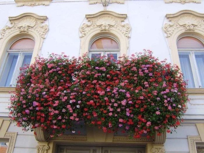 яркие цветы на балконе на этажерках дизайн