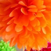 разноцветные бумажные цветы в фасаде зала фото