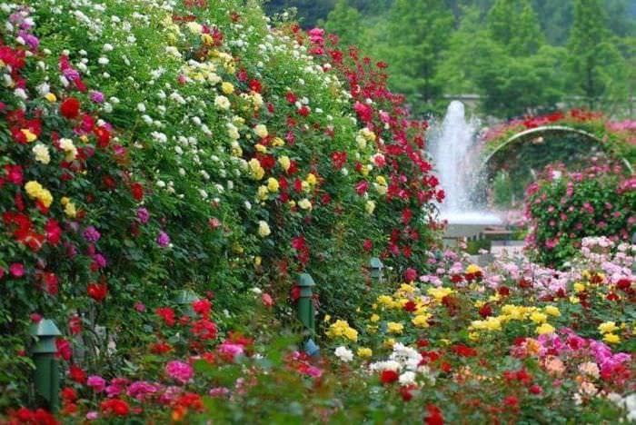 большие яркие цветы в ландшафтном дизайне клумбы
