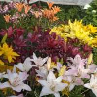 небольшие яркие цветы в ландшафтном дизайне загородного дома картинка