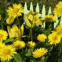 маленькие красивые цветы в ландшафтном дизайне розария фото