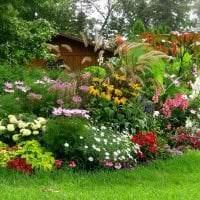 небольшие светлые цветы в ландшафтном дизайне дачи фото