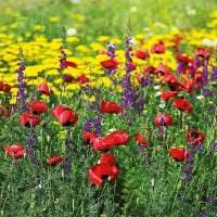 большие необычные цветы в ландшафтном дизайне дачи фото