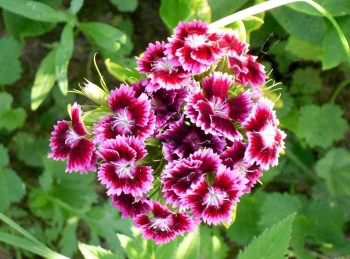 маленькие светлые цветы в ландшафтном дизайне загородного дома