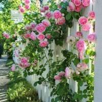 небольшие красивые цветы в ландшафтном дизайне клумбы фото