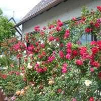 большие красивые цветы в ландшафтном дизайне загородного дома фото