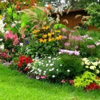 небольшие необычные цветы в ландшафтном дизайне дачи картинка