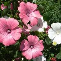 маленькие яркие цветы в ландшафтном дизайне розария фото