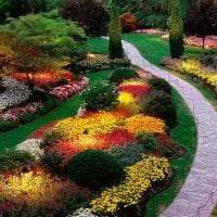 небольшие светлые цветы в ландшафтном дизайне розария картинка