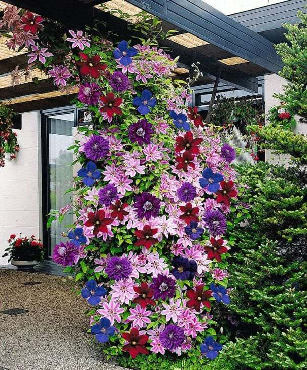небольшие яркие цветы в ландшафтном дизайне клумбы