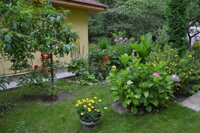 Фото новых цветов для дачи