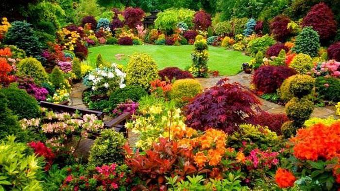 большие красивые цветы в ландшафтном дизайне дачи