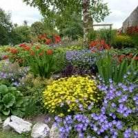 небольшие яркие цветы в ландшафтном дизайне дачи картинка