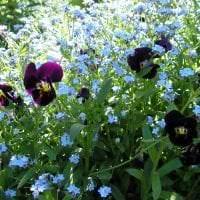 большие красивые цветы в ландшафтном дизайне розария картинка