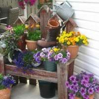 маленькие яркие цветы в ландшафтном дизайне загородного дома фото