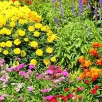 большие светлые цветы в ландшафтном дизайне дачи картинка