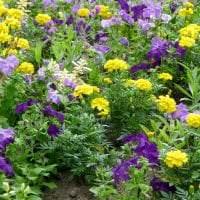 небольшие необычные цветы в ландшафтном дизайне клумбы фото