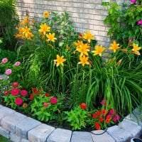 небольшие светлые цветы в ландшафтном дизайне дачного участка фото
